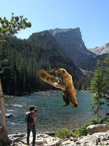 B Mobile Mountain Lion mountain lion and bear...