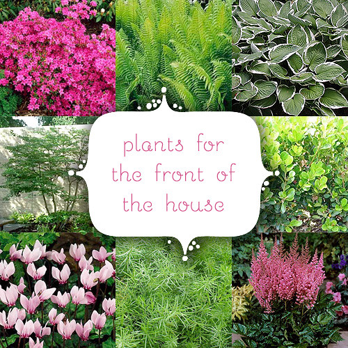 Plants for the front of the house blogged for Ideas for planting flowers in front yard
