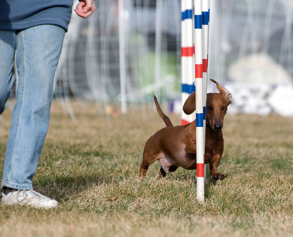 Dog Training Columbia Tn