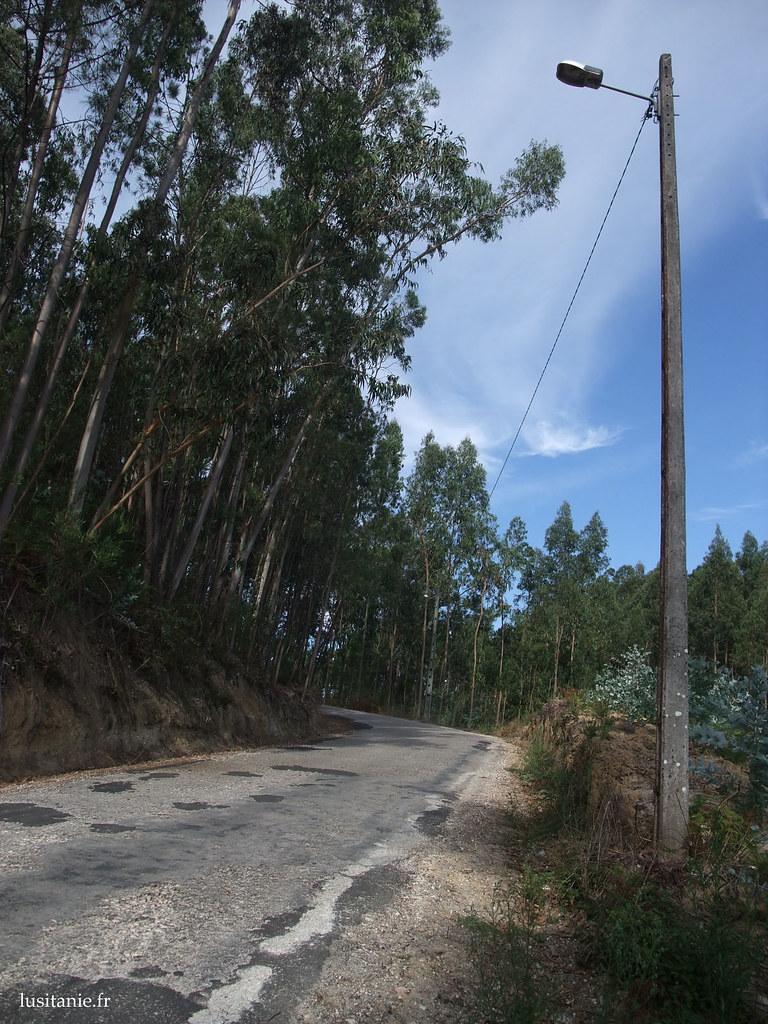 Entre deux villages, la forêt : nous sommes en plein coeur du Pinhal de Leiria, la Pinède