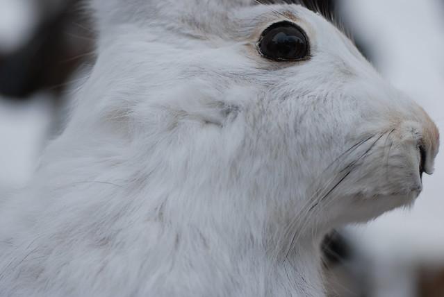 Freezing Stuffed Animals To Kill Bed Bugs