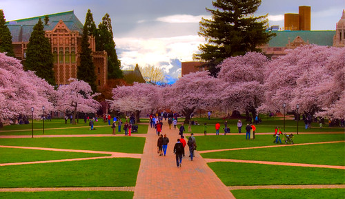 UW Cherry Blossoms - HDR Stormy Clouds | The University's ...
