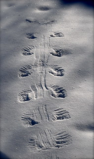 Even Birds Like To Make Snow Angels | by ~Jetta Girl~