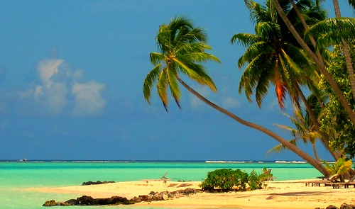 Palm trees in Bora Bora | by mick62
