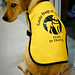 Guide Dogs of America!