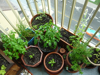 vegetable & herb garden | by Bad Alley