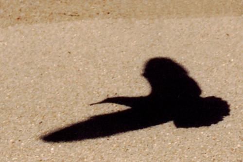 Bird Shadow Seagull Landing On The Beach Monterey