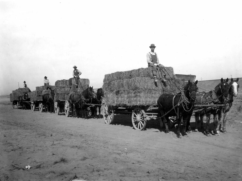 Ic Free Shipping >> Hauling alfalfa hay | Description/Notes: Horse teams are hau… | Flickr