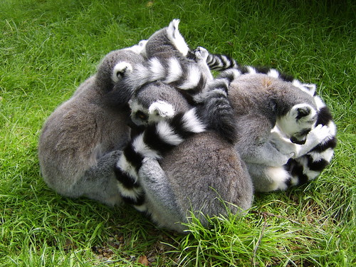 Group Hug By Ian Layzell Flickr Photo Sharing
