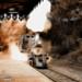 Fractalius Train