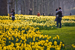 Love Among The Daffodils | by garryknight