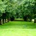 Let's Be Avenue at Hidcote Manor Garden!