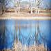 reflection DSC_5381 copy
