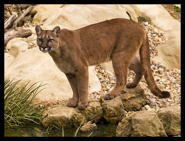 A cougar with a young woman kk amp tt - 1 8