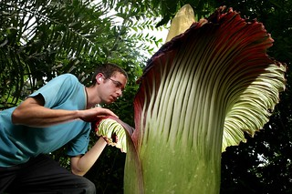 Titan Arum | by Eden Project
