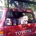 Best doggie pals