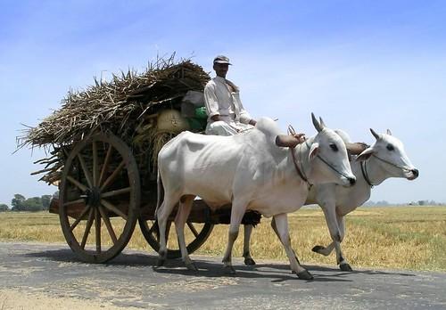 Bullock Carts Images Bullock Cart | by Limetree