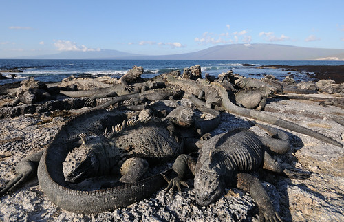 The Dragons of Galápagos | by Scott Ableman