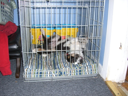 Crate Training Dog First Night