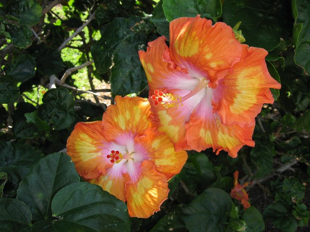 Big Island Hawaii Best Hikes