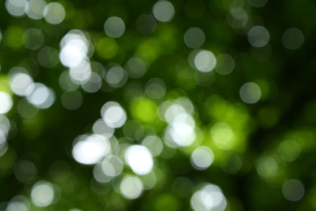 230/365 - Make this go on forever (Forest bokeh)   Me and ...