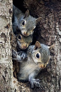 A Squirrels Family Tree | by G. H. Holt Photography