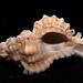 Shells of Sanibel 020