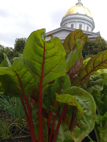 Montpelier State House Garden | by Waldo Jaquith