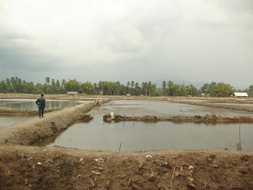 Shrimp pond | by East Asia & Pacific on the rise - Blog