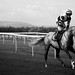 AP McCoy Black & White Horse Racing Photo