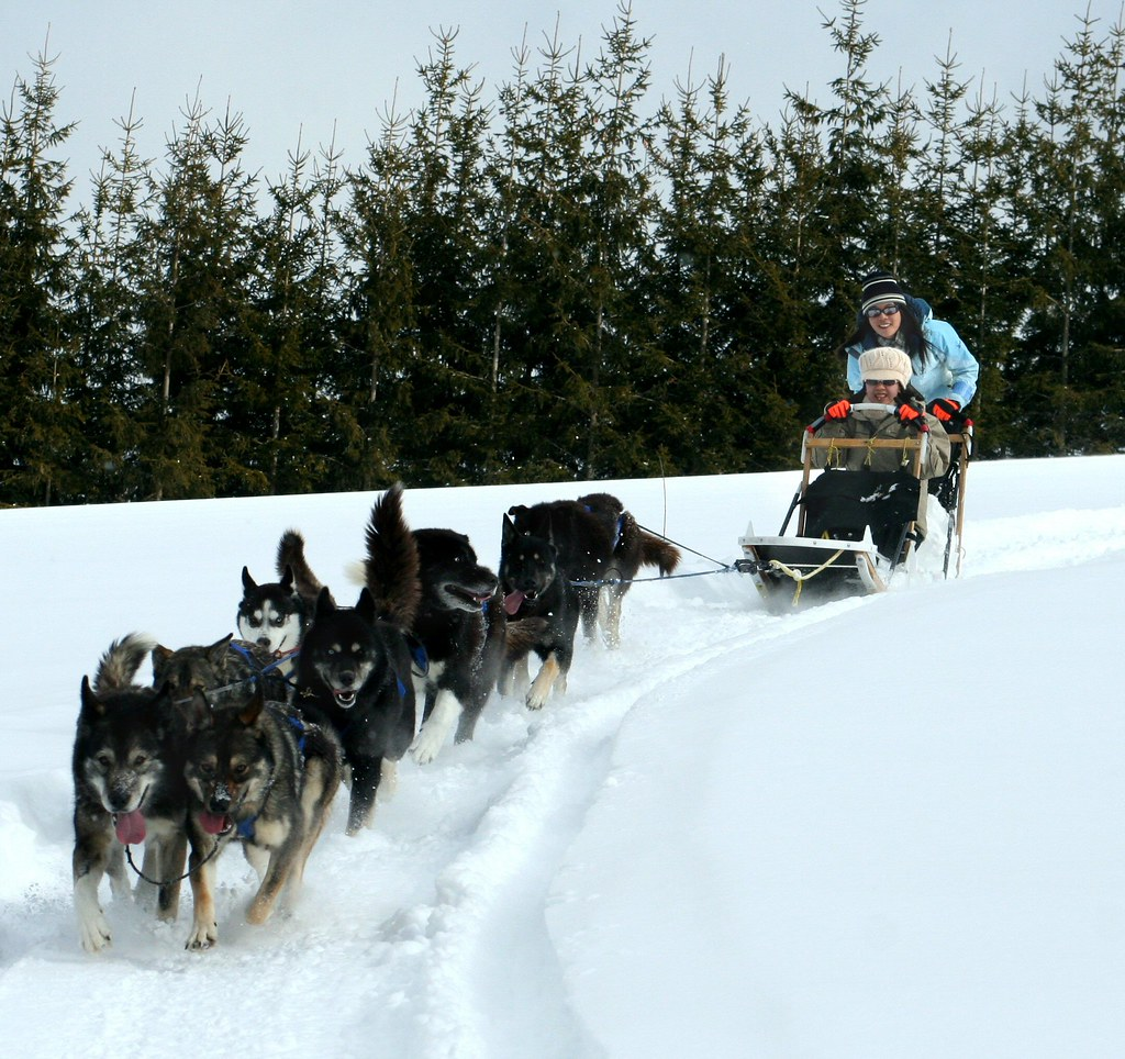 dog sledding! | on a sled pulled by 9 dogs, we went ...