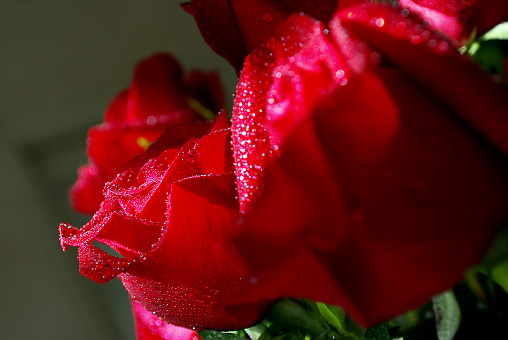 Image Result For Valentines Day Roses