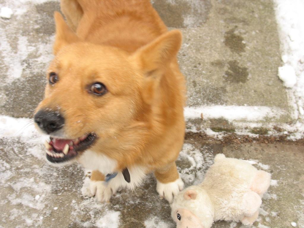 Barking Needs Dog Training