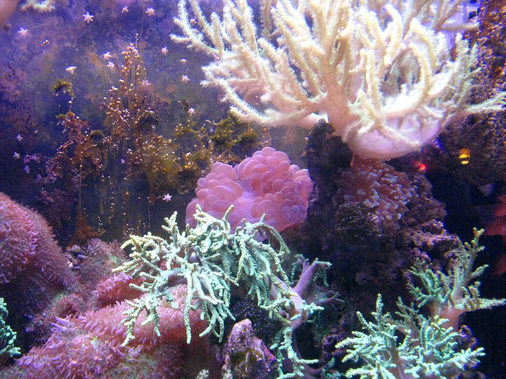 Image Result For Cleveland Aquarium
