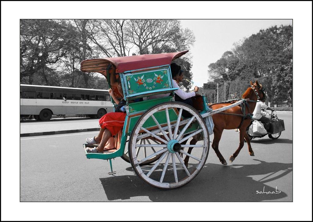 1 Horse Cart Tonga Tanga Shah Pasand Mysore
