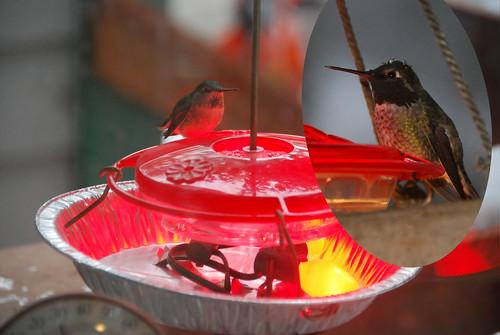 Hummingbird Feeder Heater I Jury Rigged The Hummingbird