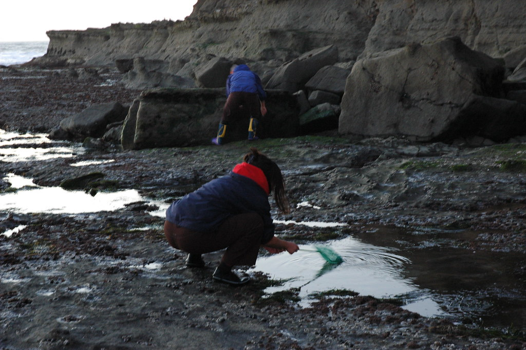 Fishing research scientists half moon bay at maverick 39 s for Half moon bay fishing report