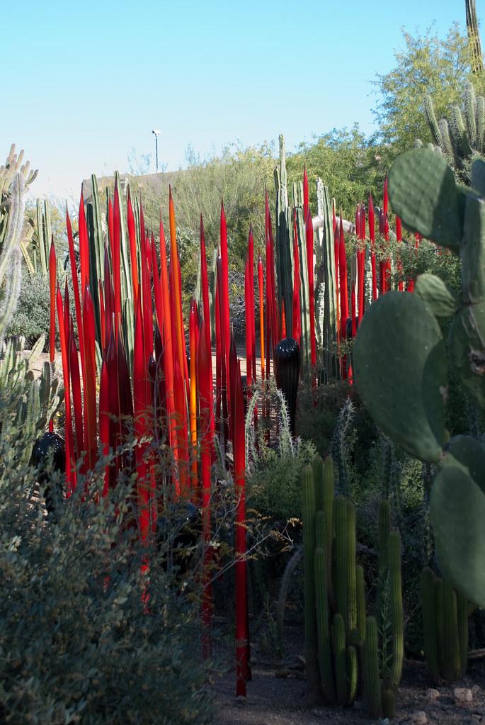 Desert Botanical Garden Norman Walsh Flickr
