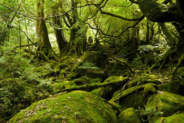 Princess Mononoke Forest | Yakushima Island's Forest of Prin… | Flickr