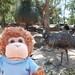 Bob meets an emu