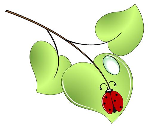 Lady bug on a green leaf | Jan 2009 | Dalia Tenenbaum | Flickr