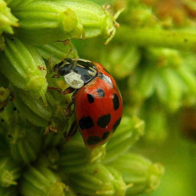 Exploring dans mon jardin sur des graines de c leri for Mon jardin 3d