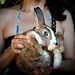 Follow the rabbit with blue eyes