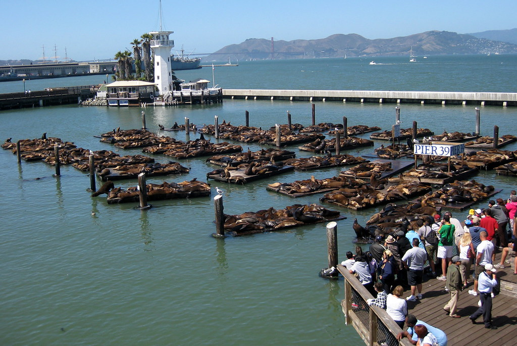 San francisco fisherman 39 s wharf sea lions at pier 39 for Fishing store san francisco