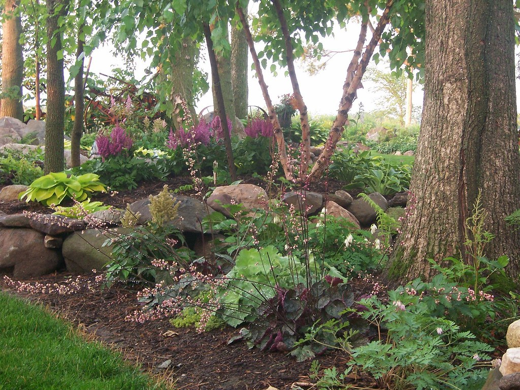 100 1710landscaping gardens shade garden hostas flickr for Garden trees for shade