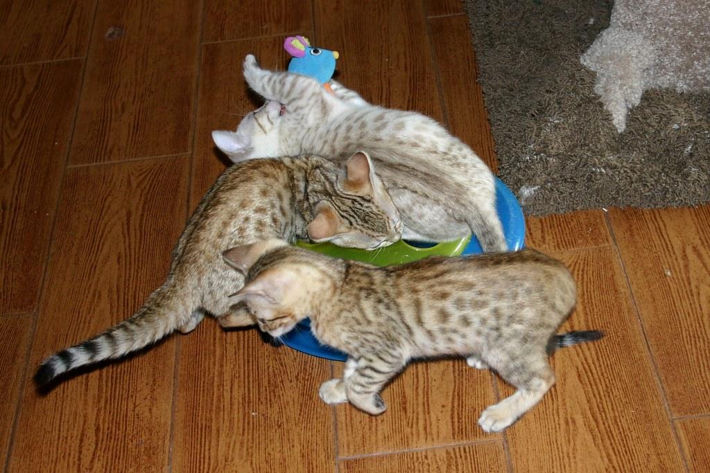 multi cat household urine
