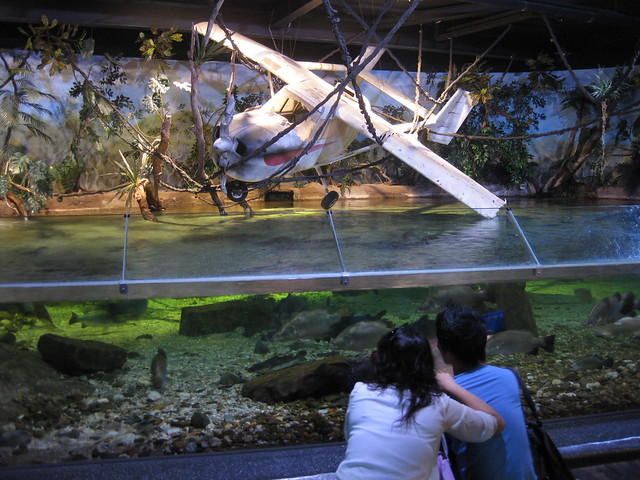 Plane/Jungle Tank at the Melbourne Aquarium Flickr - Photo Sharing!