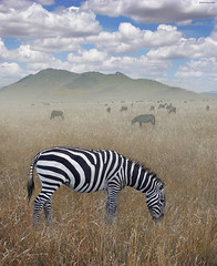 Once Upon a Time in Kenya - 1 - | by Ben Heine