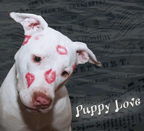 Pleasant Kissy Face White Puppy Dog Love Kahuna Luna Covered In Li Funny Birthday Cards Online Chimdamsfinfo