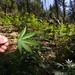 Ranger on marijuana grows eradication duty